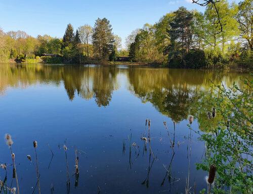 Ferienhaus blauer See